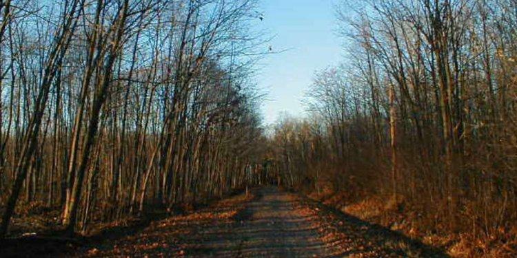 Boy Scout Lane