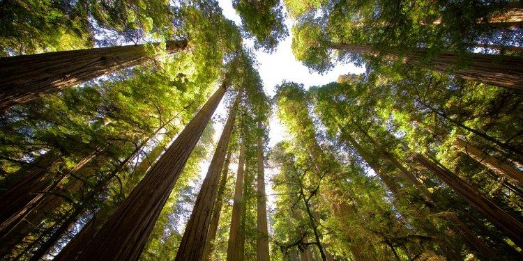 Boy Scout Tree Trail - Eureka