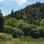 Westfall Ranch's 77 acres include a stunning second-growth redwood forest.